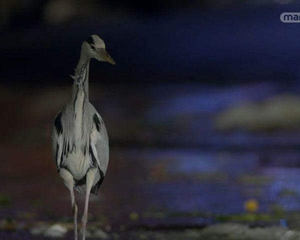 دانلود مستند شهرها از چشم حیوانات - 1 از مجموعه شهرها از چشم حیوانات