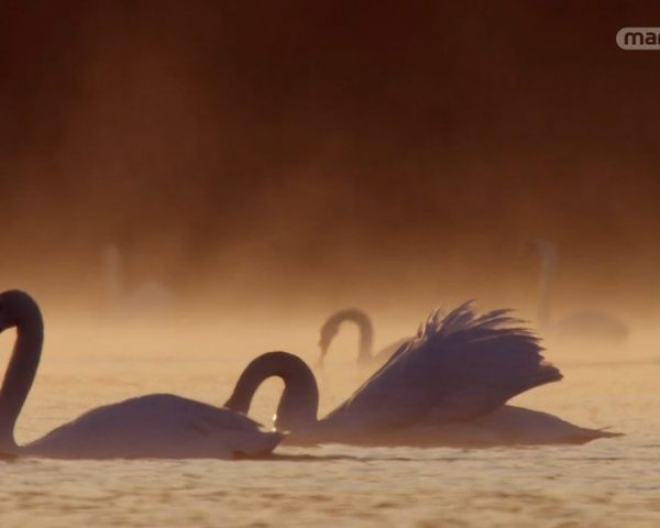 دانلود مستند دیوید آتنبرو و راز تخم پرنده ها از مجموعه اسرار حیات وحش