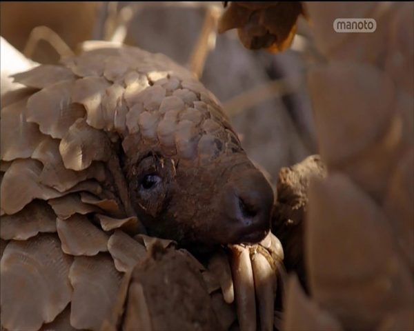 دانلود مستند راز پولک پوست از مجموعه اسرار حیات وحش