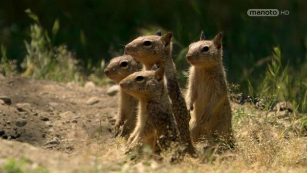 Download Smart Squirrel Documentary from the Wildlife Secrets Collection