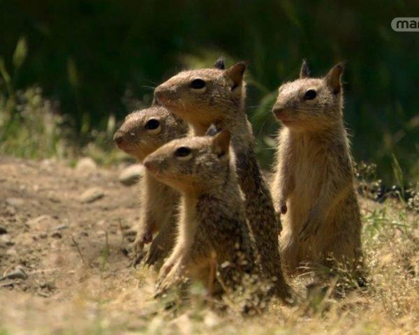 دانلود مستند سنجاب های باهوش از مجموعه اسرار حیات وحش