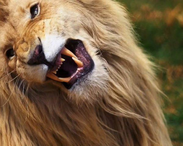 دانلود مستند آنل ایسنایمن از مجموعه رفاقت با حیوانات با دوبله شبکه منوتو