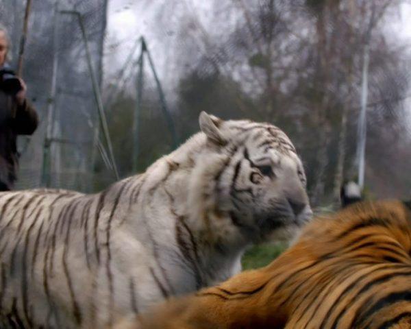 دانلود مستند پینکی جاناتا از مجموعه رفاقت با حیوانات با دوبله شبکه منوتو