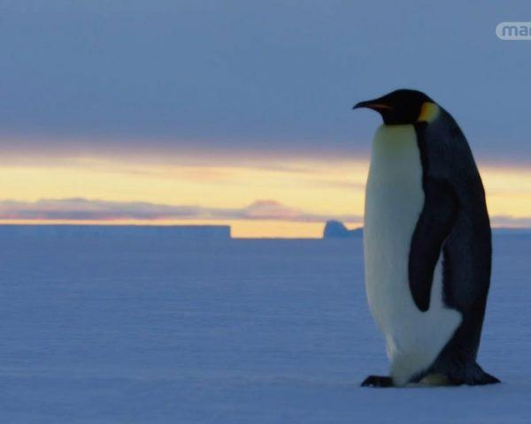 دانلود مستند پنگوئن از مجموعه خاندان وحش با دوبله شبکه منوتو