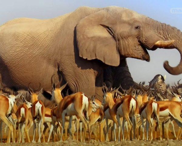دانلود مستند بزرگترین حیوانات روی زمین از مجموعه اسرار حیات وحش با دوبله شبکه منوتو