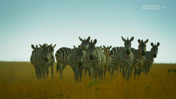 Serengeti  -2
