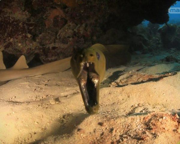 دانلود مستند اثر ملی گوشهای خرس از مجموعه کاوشگران طبیعت با دوبله شبکه منوتو