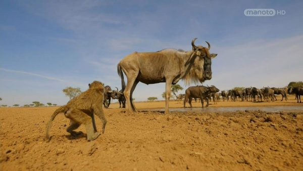 Serengeti  -3