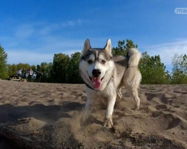 دانلود مستند مربیان سگ - 6 از مجموعه مربیان سگ با دوبله شبکه منوتو
