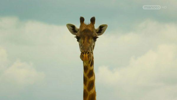 Serengeti  -5