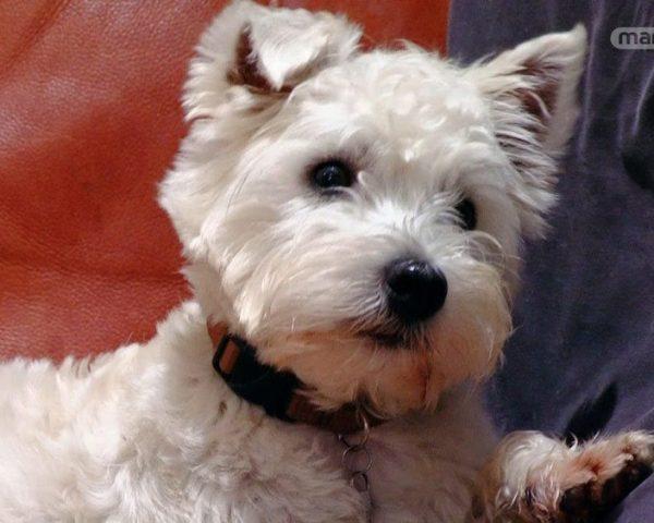 دانلود مستند دنیای سگ های کوچولو - 1 از مجموعه دنیای سگ های کوچولو با دوبله شبکه منوتو