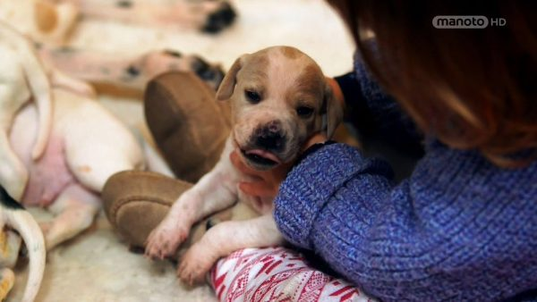 The Wonderful World of Puppies – 2