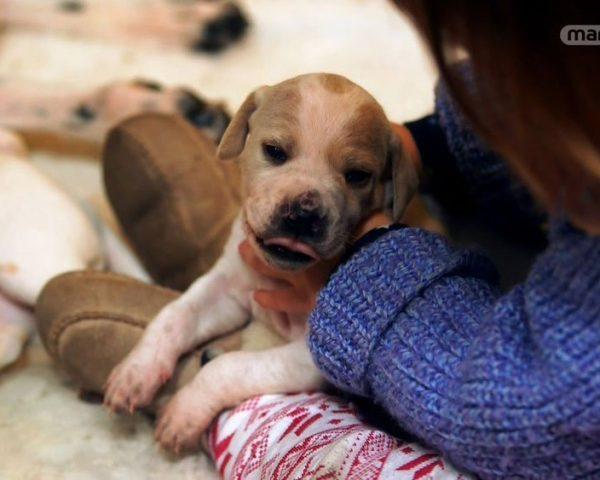 دانلود مستند دنیای سگ های کوچولو - 2 از مجموعه دنیای سگ های کوچولو با دوبله شبکه منوتو