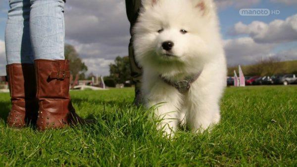 The Wonderful World of Puppies – 3