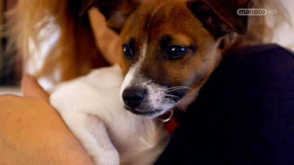 دانلود مستند دنیای سگ های کوچولو - 4 از مجموعه دنیای سگ های کوچولو با دوبله شبکه منوتو