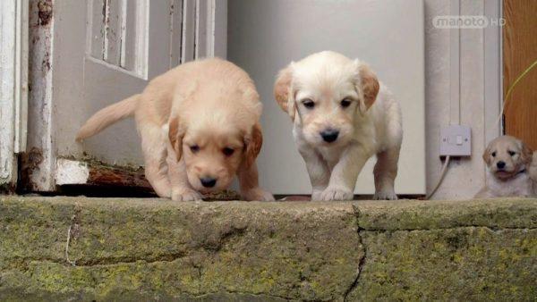The Wonderful World of Puppies – 6