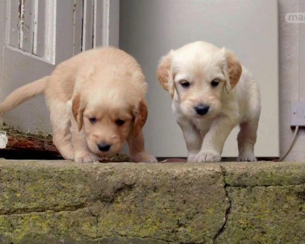 دانلود مستند دنیای سگ های کوچولو - 6 از مجموعه دنیای سگ های کوچولو با دوبله شبکه منوتو