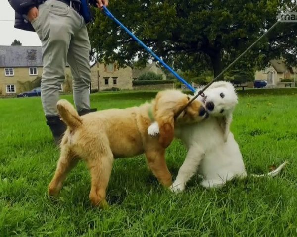 دانلود مستند دنیای سگ های کوچولو - 7 از مجموعه دنیای سگ های کوچولو با دوبله شبکه منوتو