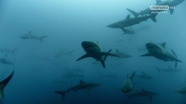 دانلود مستند شکار - 3 از مجموعه شکار با دوبله شبکه منوتو