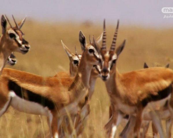 دانلود مستند شکار - 4 از مجموعه شکار با دوبله شبکه منوتو