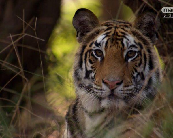 دانلود مستند شکار - 6 از مجموعه شکار با دوبله شبکه منوتو
