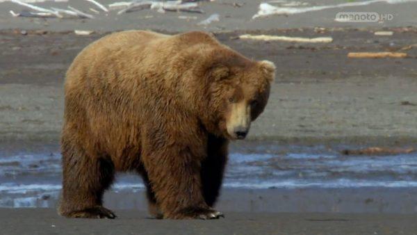 دانلود مستند ملاقات با خرس ها از مجموعه اسرار حیات وحش با دوبله شبکه منوتو