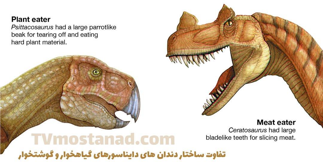 تفاوت ساختار دندان های دایناسور های گیاهخوار و گوشتخوار