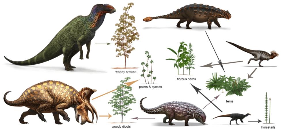 زنجیره غذایی دایناسور ها