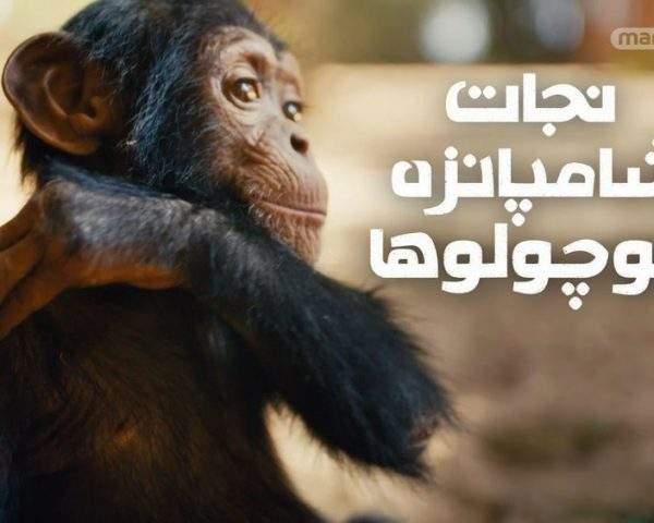 دانلود مستند نجات شامپانزه کوچولوها (3قسمت) از مجموعه ویژه برنامه با دوبله شبکه منوتو